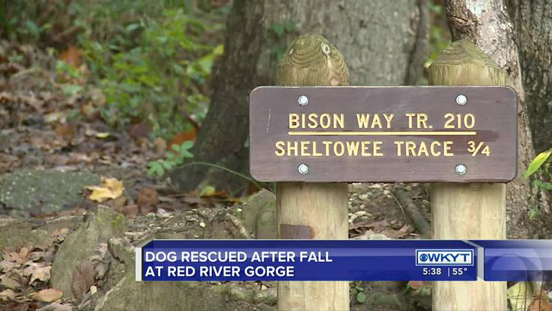While training in the Red River Gorge this weekend, the Wolfe County Search and Rescue team got...