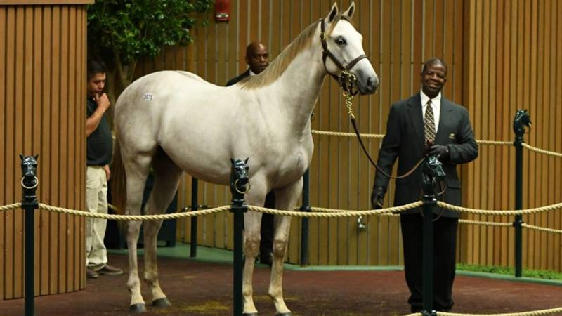 Keeneland's September sale kicked off Sunday with a new look and feel. (File image from 2019...