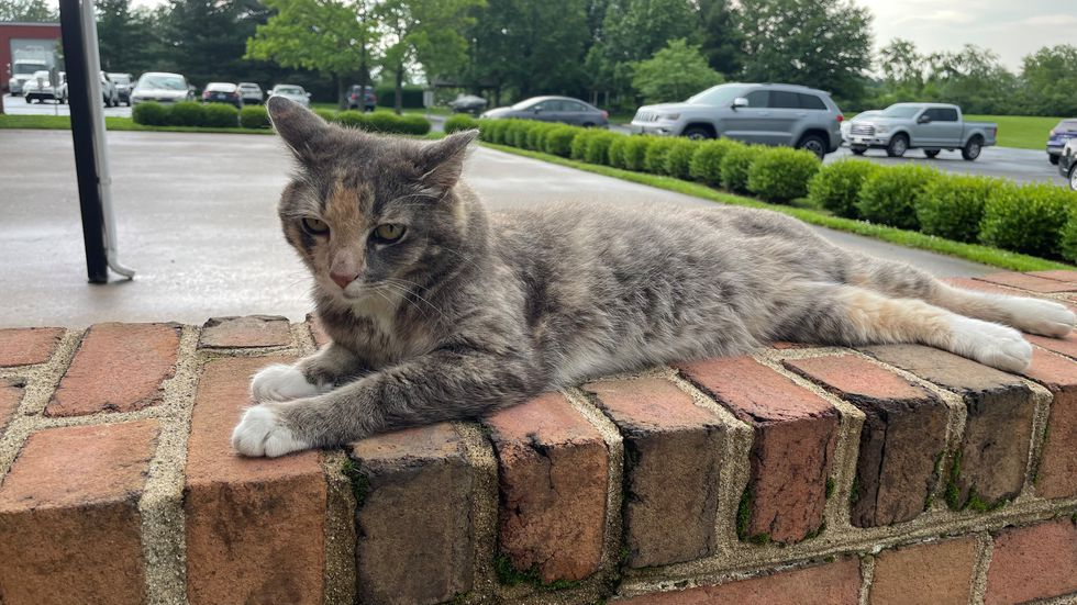 During her months at WKYT, she's been hanging out with one of her old owner's old friends.