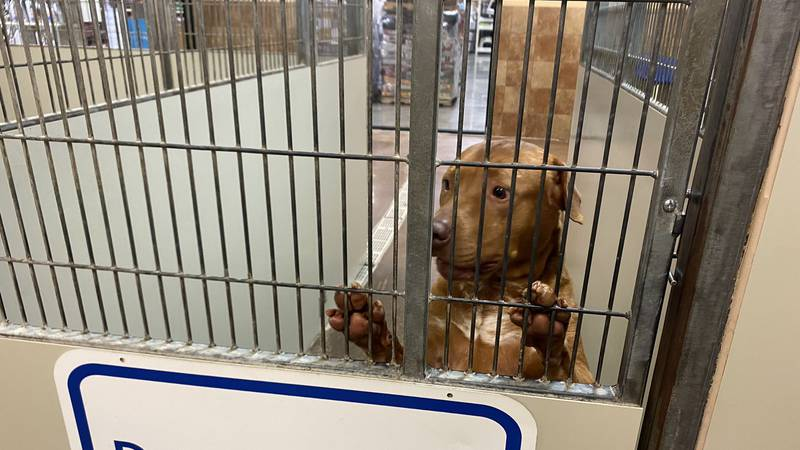 """""""Empty the Shelters"""" runs through Sunday, Aug. 22 at both the Lexington Human Society on Old..."""