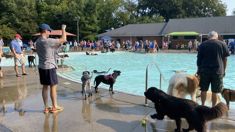 Last year the event was canceled because of the pandemic and the dogs, owners, organizers, and...