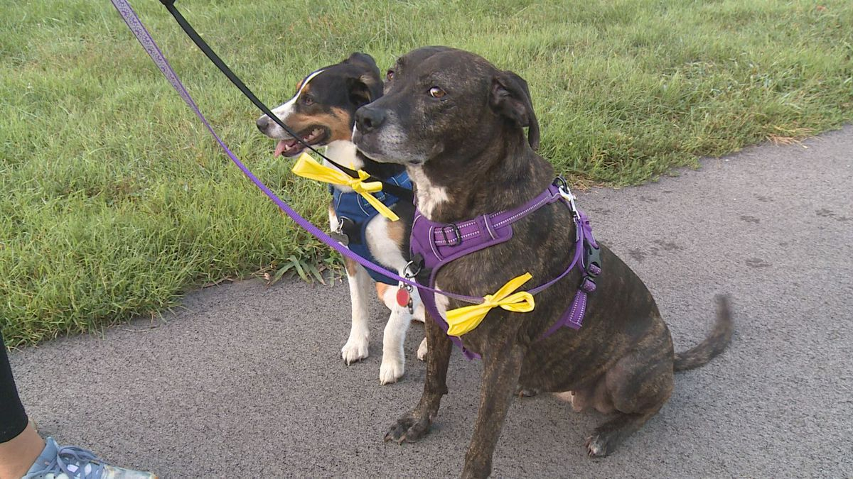 The Yellow Dog Project is aiming to bridge the gap between dog owners and the rest of the...