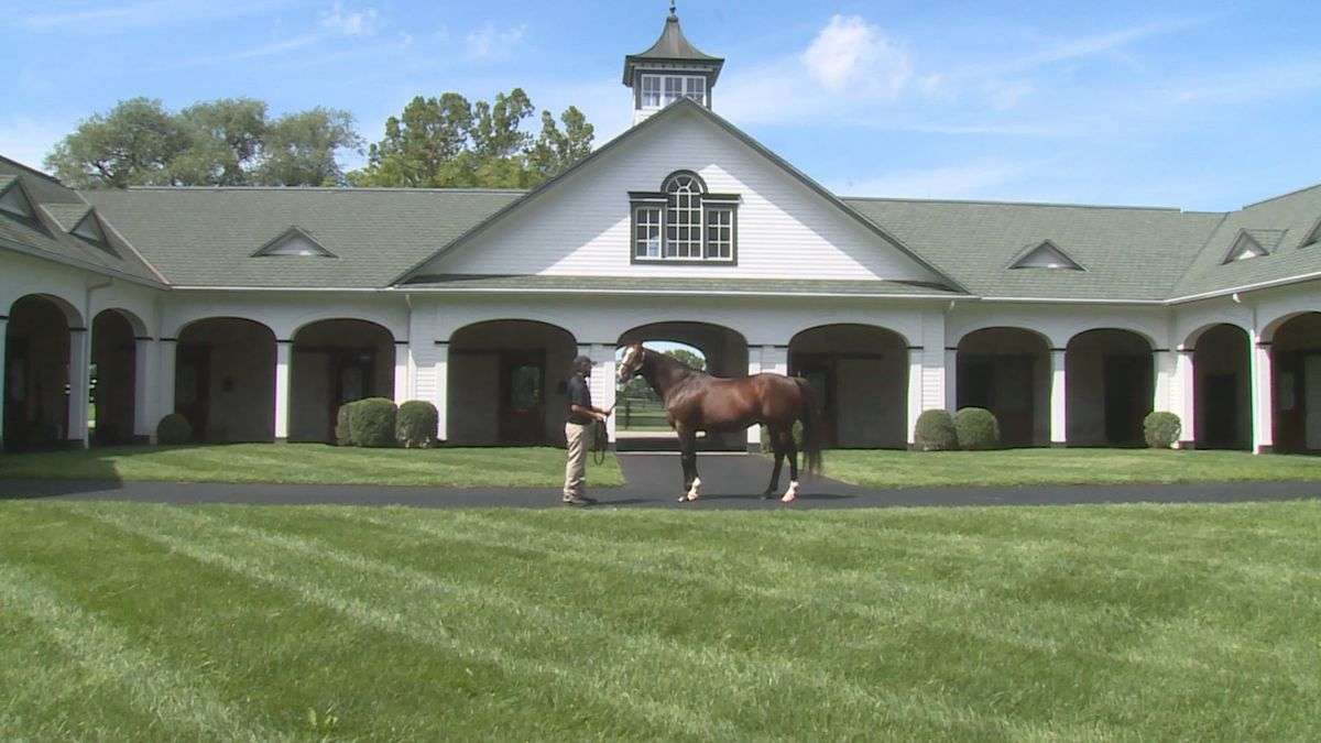 Into Mischief, Authentic's sire, stands in front of Spendthrift Farm after the win at the Kentucky Derby.
