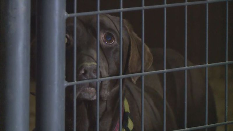 Rescues across Kentucky are working tirelessly to help hundreds of animals found in deplorable...
