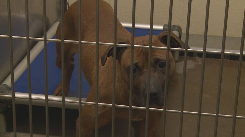 The Lexington Humane Society says they always want to match animals and owners to create a...