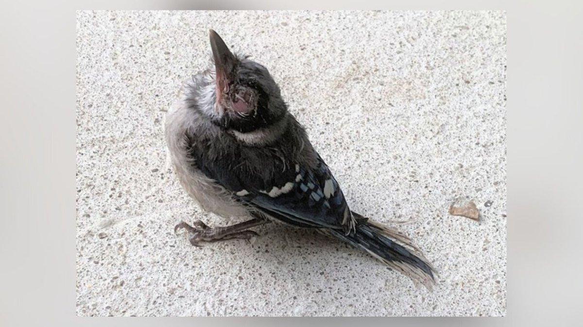 Update on illness that affected birds in Kentucky