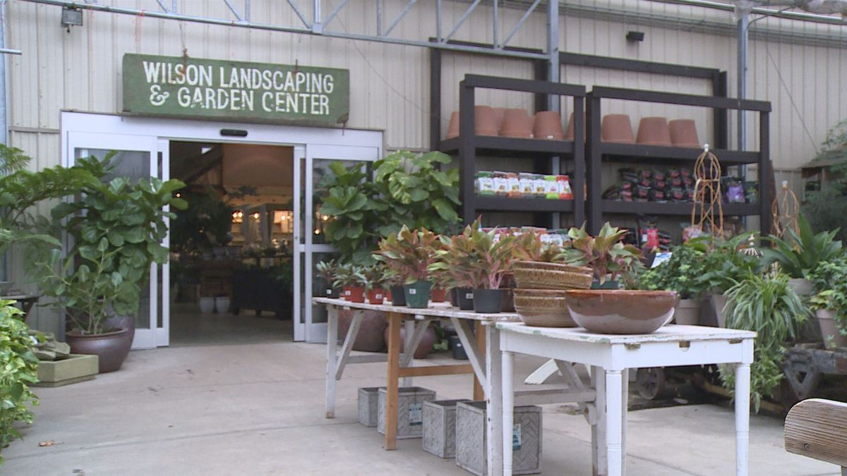 Experts at Wilson Nurseries say that while the temperatures may vary, plants, for the most part, are usually resilient (WKYT)
