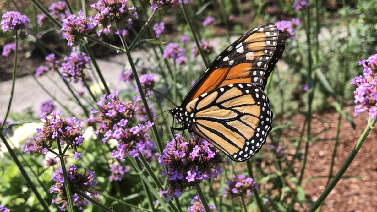 A new butterfly greenhouse is open in Frankfort (Photo: Megan James/WKYT)