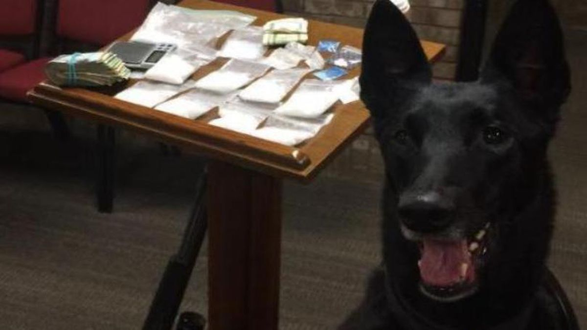 Boyle County Sheriff's Office K-9 NiKi posed with a drug bust in May 2016. (Photo provided)
