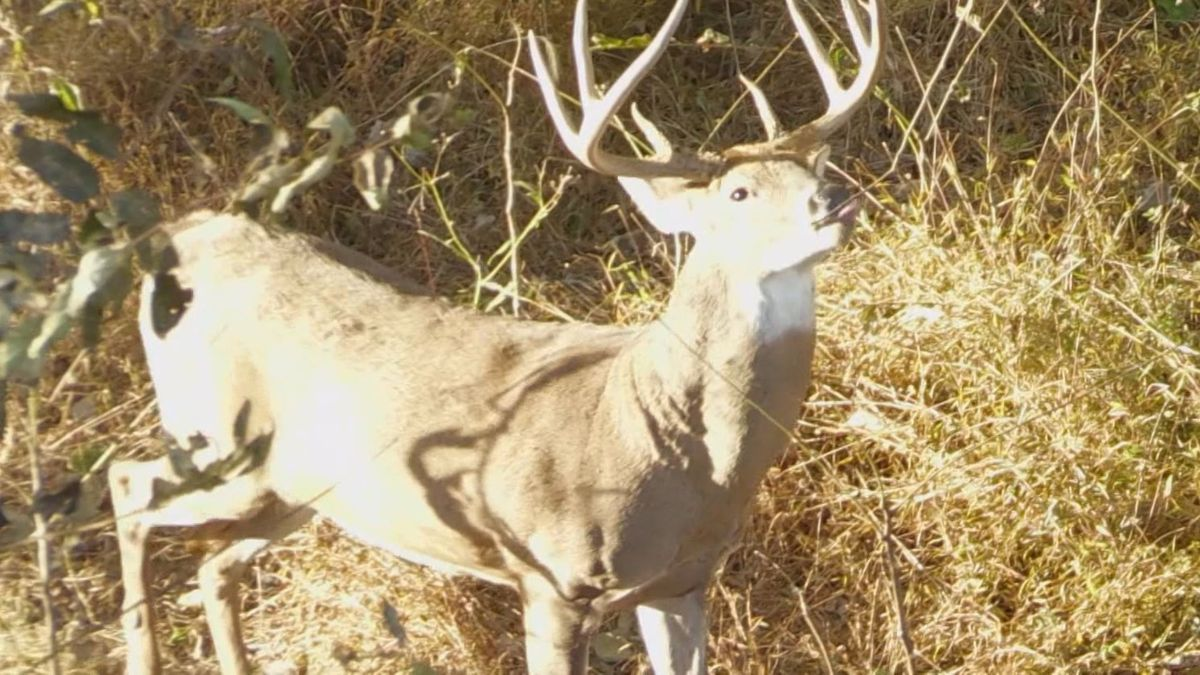 Chronic Wasting Disease (CWD,) is in six states bordering Kentucky.  (Photo: WKYT/Megan James)