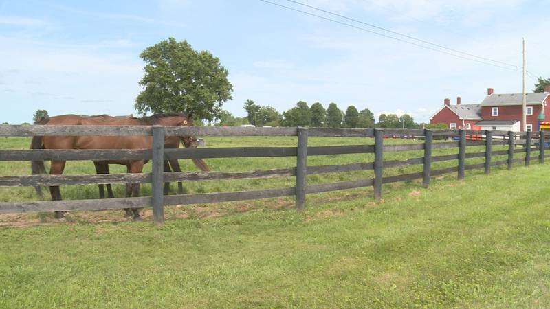 Shepherd's House and Taylor Made Farm have partnered to offer career opportunities in the horse...