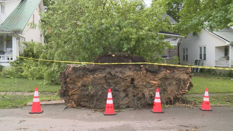 A tree fell on a home in Winchester, trapping a family inside until neighbors said they could...