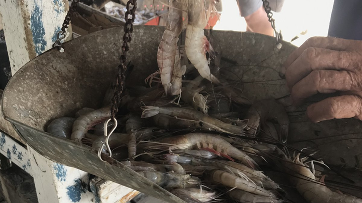 Domestic shrimpers want to see the U.S. government take more action against tainted imported...