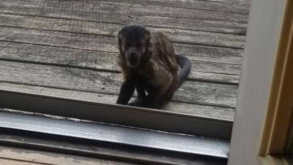 A capuchin monkey showed up outside a family's home in Owenton, Kentucky, Sunday. Kentucky...