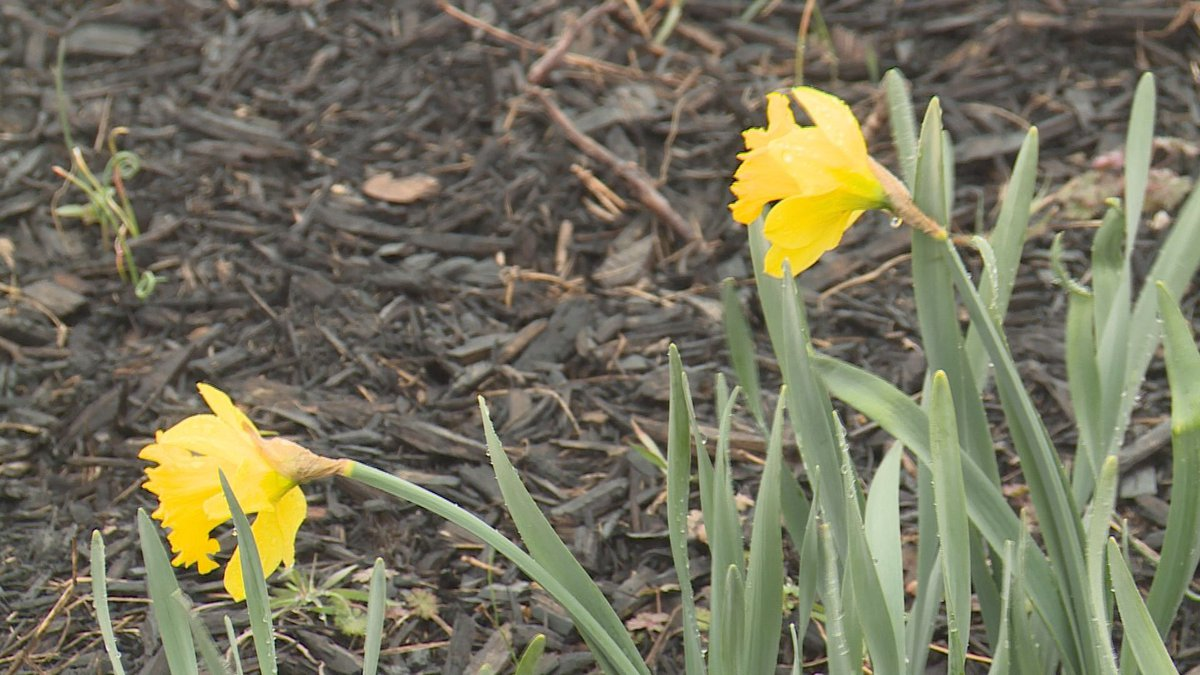 Flowers are already starting to bloom in early March.