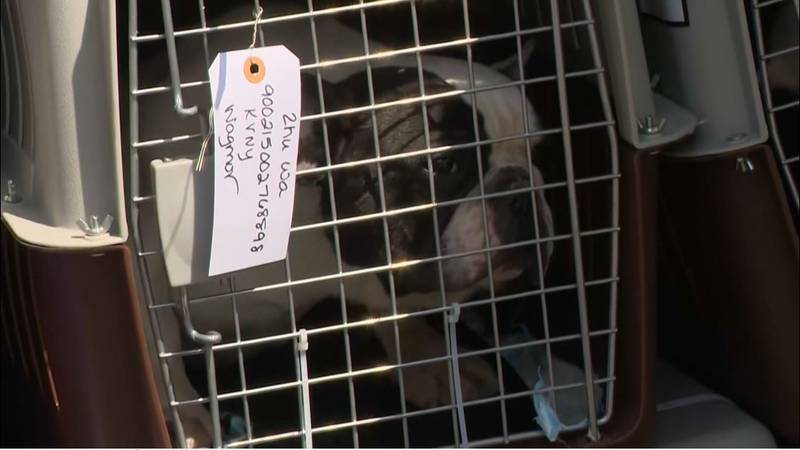 The ban is being imposed because of a spike in the number of puppies denied entry because they...